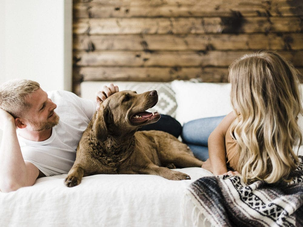Blonde couple with a chesapeake bay retriever laying on the bed