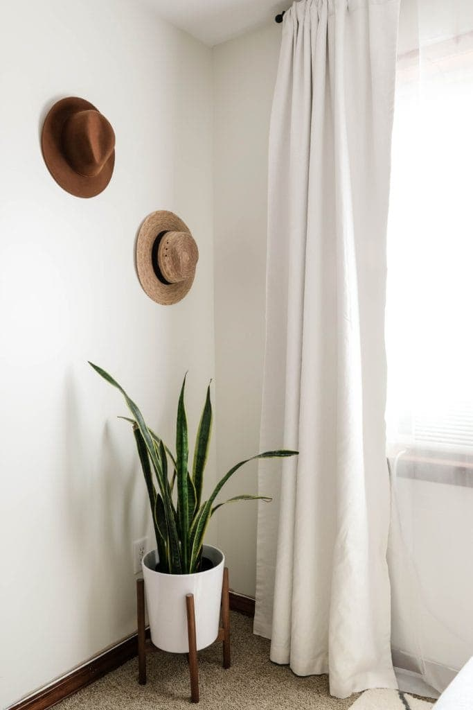 the corner of a room with white walls.  two hats are hung on the wall with a potted snake plant below