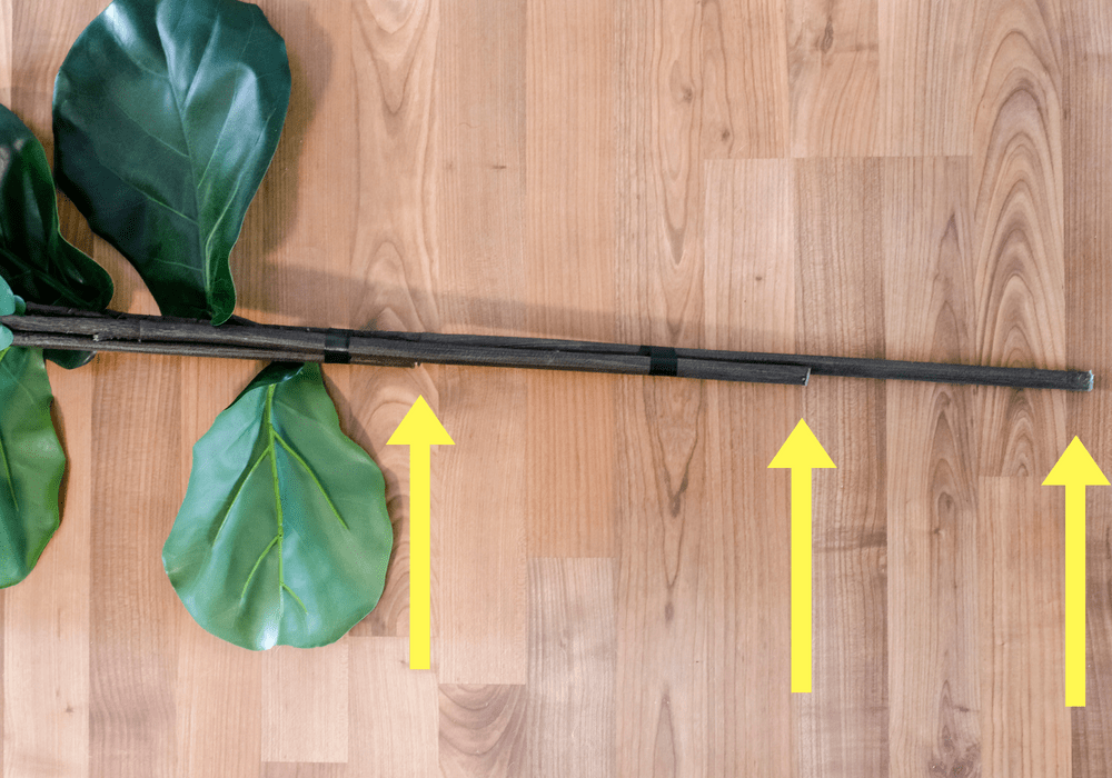 fiddle leaf fig branches aligned together to form a tree