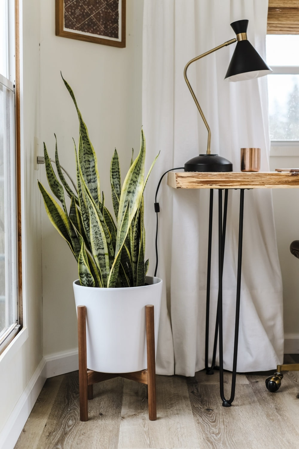 Snake plant in white planter next to a home office desk