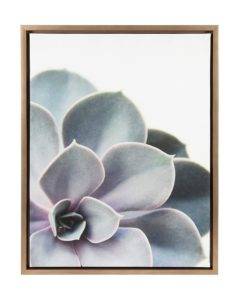succulent framed canvas wall art