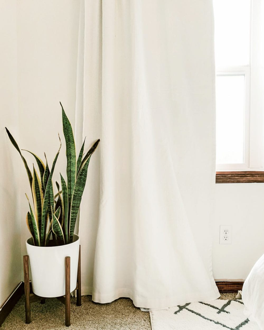 Bedroom with a plant in the corner and light pouring in from the window